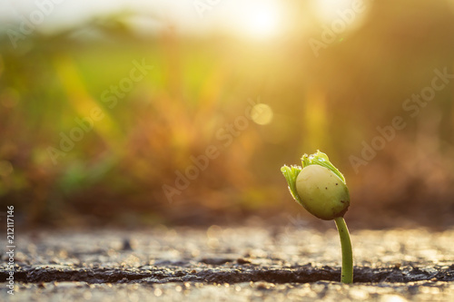 Fotografiet  One green young seed of tree growing from cracks of asphalt road