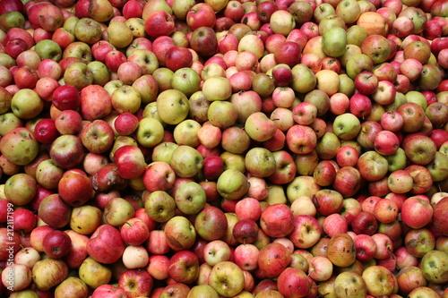 Vászonkép Sehr viele Äpfel in der Kelterei