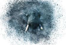 Elefant Zerfall Effekt