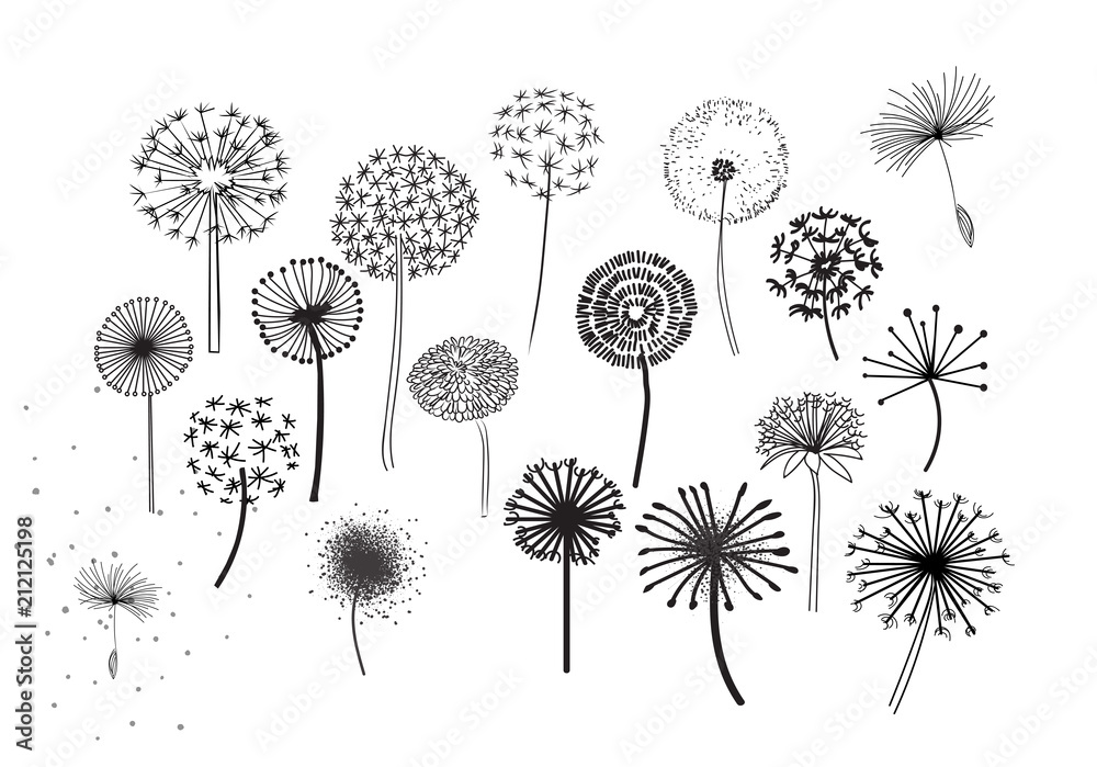 Fototapety, obrazy: Dandelion Fluffy Seeds Flowers .  Decorative Elements for design, dandelions flowers blooming. Hand Drawn Doodle Style Black And White Drawing Vector Icons Set