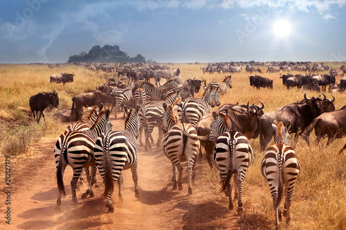 African wild zebras and wildebeest in the African savanna. Wild nature of Tanzania. Intence heat.