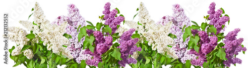 Row of bouquets of white and lilac and purple lilacs on a white background.