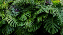 Green Tropical Leaves Of Monst...