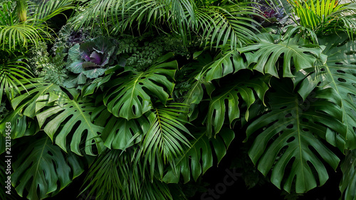 Poster Natuur Green tropical leaves of Monstera, fern, and palm fronds the rainforest foliage plant bush floral arrangement on dark background, natural leaf texture nature background.