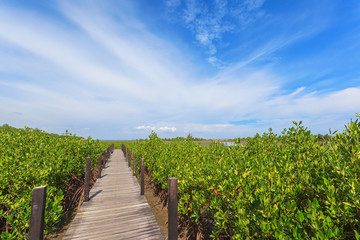 Fototapeta na wymiar Beautiful green mangroves forest against blue sky background at Chantaburi province, Thailand