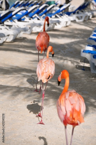 Foto op Aluminium Flamingo the flamingo march
