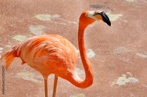 Foto op Canvas Flamingo Pink Flamingo on the Beach