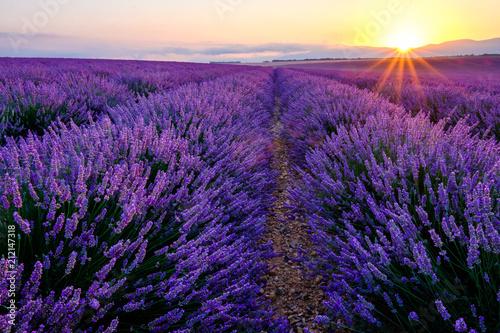 Fotobehang Lavendel Champ de lavande en fleurs, lever de soleil. Plateau de Valrnsole, Provence, France.