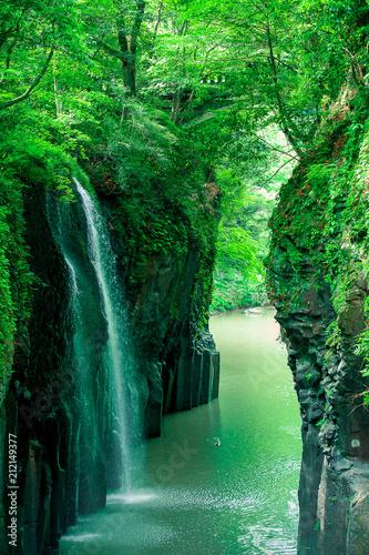 Foto op Canvas Watervallen 新緑の真名井の滝と、滝下で遊ぶマガモ(宮崎県、高千穂)