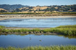 canvas print picture - Wetlands bird refuge area