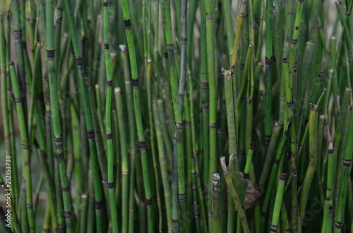 Foto op Plexiglas Groene Bambu no Jardim Botânico de Curitiba