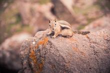 A Small, Curious Chipmunk Stan...