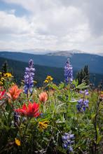 Wildflowers In A Field In Colorado.