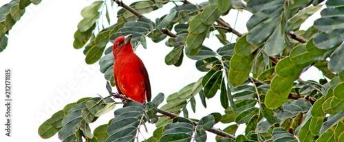Photo  colombian bird