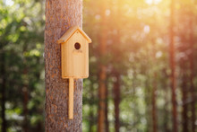 Birdhouse Is Attached To Tree In Forest Sunlight. Concept Spring