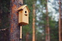 Birdhouse Is Attached To Tree In Forest. Concept Spring