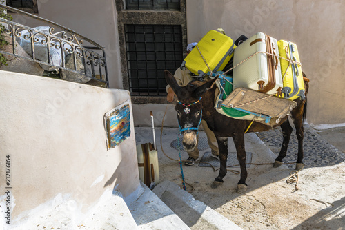 Donkey is the best transport in mountain village