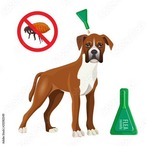Flea remedy product in container for dog vector illustration Poster