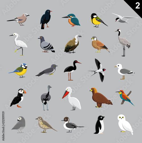 Fototapeta premium Różne ptaki kreskówka wektor ilustracja 2