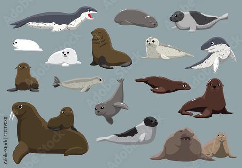 Various Seals Set Cartoon Vector Illustration Fototapete