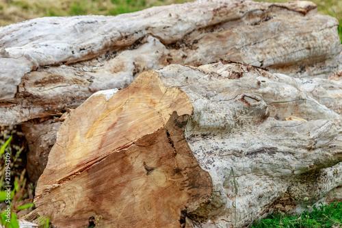 Fotografie, Obraz  chopped down old tree trunk