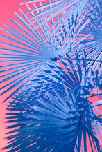 Minimal Blu Palms On Pink Background