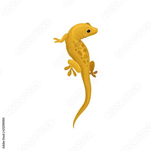 Photo Lizard amphibian animal vector Illustration on a white background