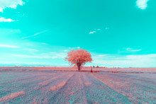 Surreal Tree In Infrared Photo...
