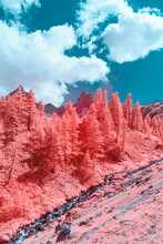 Surreal Apls In Infrared Photography