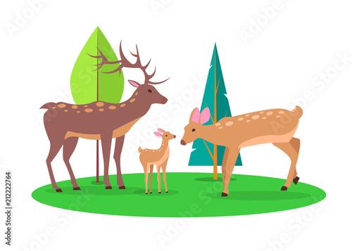 Fotografia Deer Family in Woods Isolated Cartoon Illustration