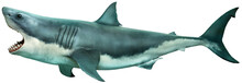 Great White Shark Side View 3D...