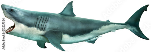 Great white shark side view 3D illustration Wallpaper Mural