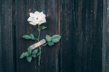 White Rose On A Wooden Backgro...