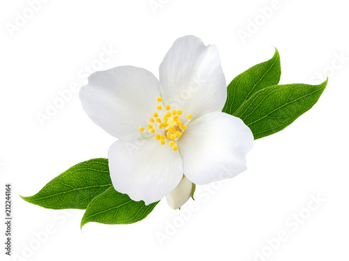 Jasmine flower with leaves  isolated on white background Wallpaper Mural