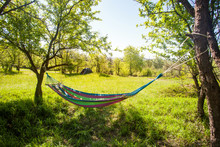 Hammock Hanging Between Trees On Green Field At Sunny Day