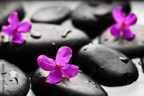 Aluminium Prints Spa Grey wet pebbles with flowers background