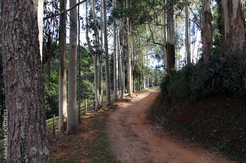 In de dag Weg in bos Cunha