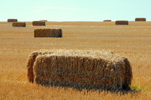 Rectangular Bales Of Straw On ...