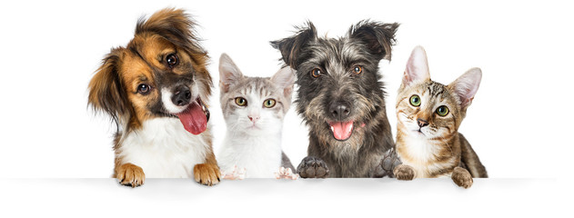 Fototapeta Pies Dogs and Cats Paws Over Website Banner