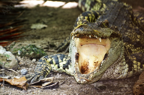 Foto op Canvas Krokodil Dangerous Crocodile near Water.