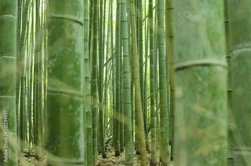 Foto op Plexiglas Bamboe 竹林