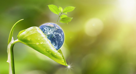 FototapetaEarth Day.Planet earth with beautiful freshness growth tree and drop of water holed by new growth plant on outdoor summer forest bokeh background.Earth image furnished by NASA.