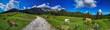 Österreich Berwiese in den Alpen bei gutem Wetter mit Kühen