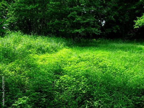 木洩れ日の中の草むら Fototapet
