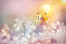 Golden Butterfly Glows In The ...