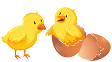 Two Young Chickens In Shell