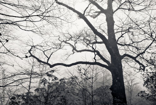 Fotografering  forest in the mist with mysterious mood