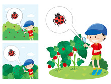 Boy With A Magnified Glass Looking At A Lady Bug