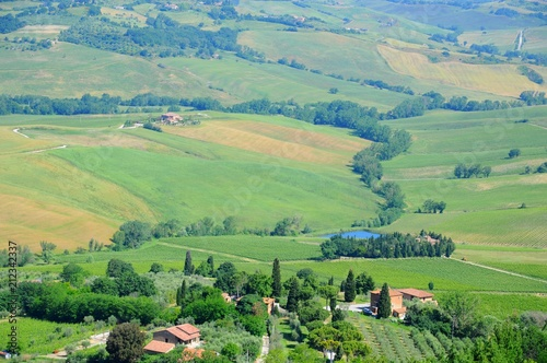 Poster Olijf Beautiful landscape of hills, cypress trees and houses in Tuscany, Italy