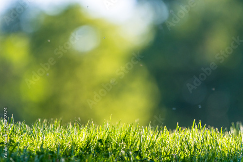 Montage in der Fensternische Gras Fresh green grass in a park with an abstract green background
